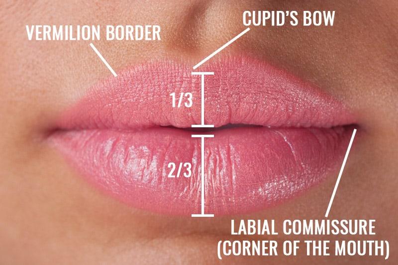 Proportiile frumoase ale buzelor